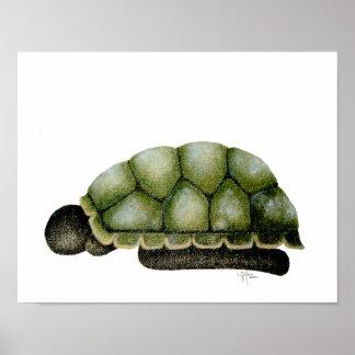 Poster de la tortuga de la simbiosis