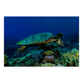Poster de la tortuga de mar de Hawksbill