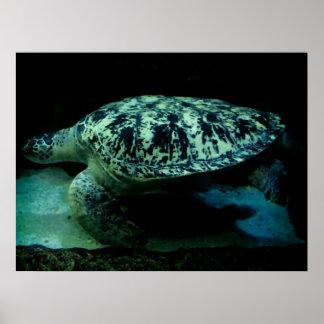 ¡Poster de la tortuga de mar! Póster