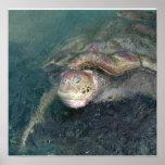 Poster de la tortuga de mar verde