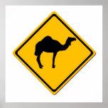 Poster de la travesía del camello