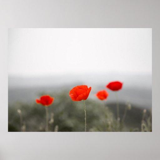 Poster de las amapolas/impresión rojos de la lona