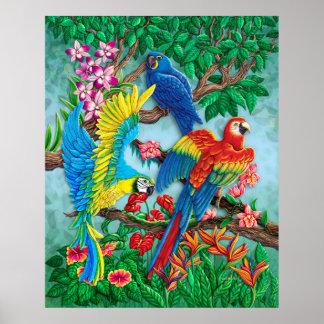 Poster de las aves del paraíso