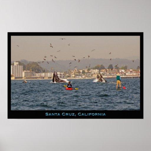 Poster de las ballenas jorobadas de Santa Cruz, Ca