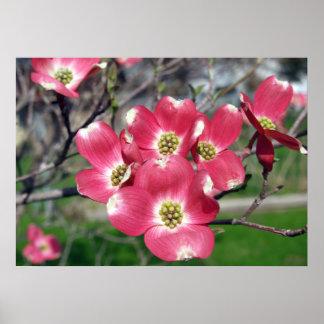 poster de las floraciones del árbol de Dogwood 28x