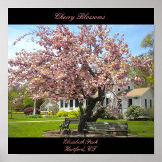 Poster de las flores de cerezo