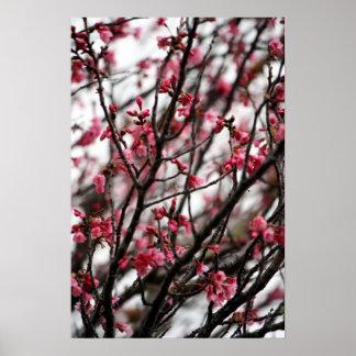 Poster de las flores de cerezo póster