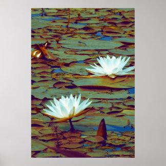 Poster de las flores de Lotus