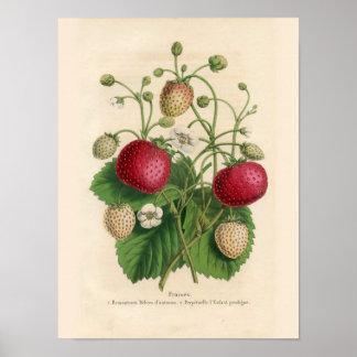 Poster de las fresas del vintage