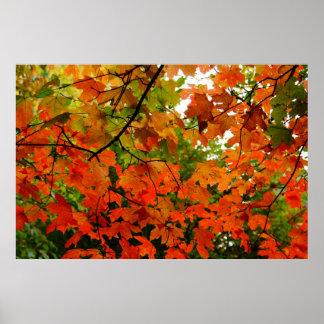 Poster de las hojas de otoño