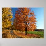 Poster de las hojas de otoño de Danby Vermont
