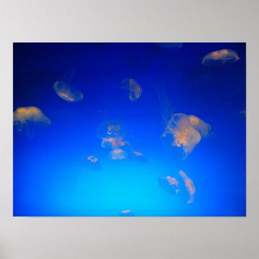 Poster de las medusas