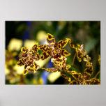 Poster de las orquídeas