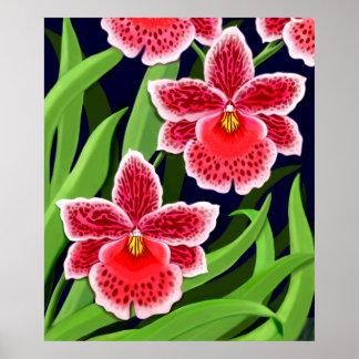 Poster de las orquídeas de Odontoglossum Póster