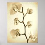Poster de las orquídeas {sepia} el |