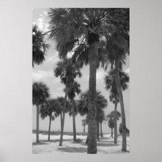 Poster de las palmeras