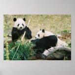 Poster de las pandas (3)