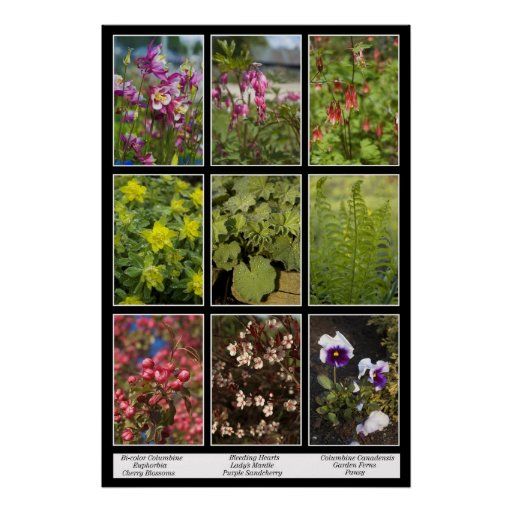 Poster de las plantas de jardín