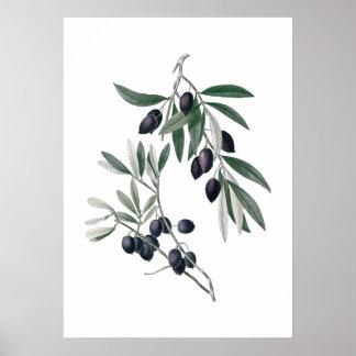 Poster de las ramas de olivo póster
