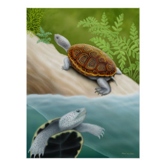 Poster de las tortugas de la tortuga acuática de D