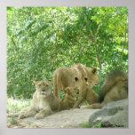 Poster de los amantes del león