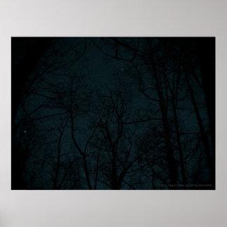 Poster de los árboles de la noche estrellada