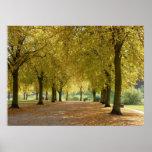 Poster de los árboles del otoño