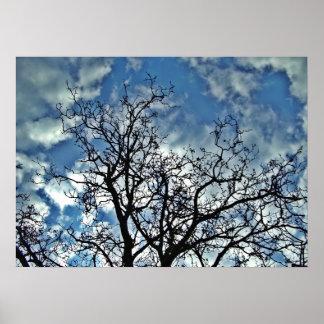 poster de los árboles póster