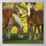Poster de los caballos de proyecto del Palomino