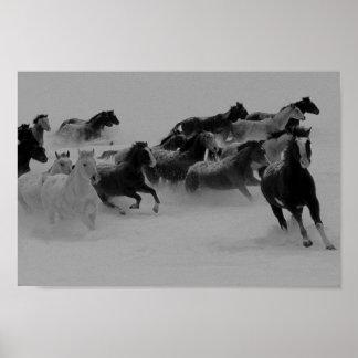 Poster de los caballos salvajes póster