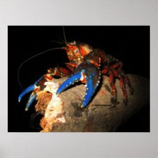 Poster de los cangrejos