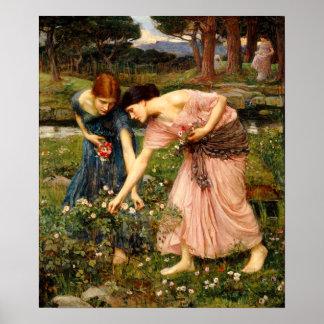 Poster de los capullos de rosa de YE del frunce de