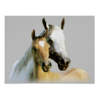 Poster de los compinches del caballo
