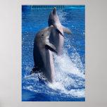 Poster de los delfínes