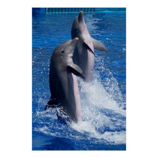 Poster de los delfínes póster