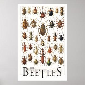 poster de los escarabajos
