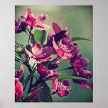 Poster de los flores de Apple