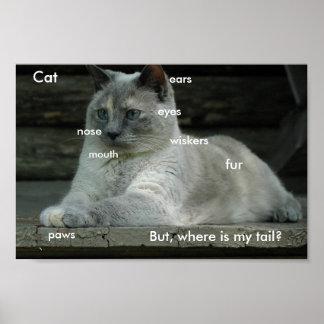 Poster de los fundamentos del gato