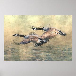 Poster de los gansos de Canadá