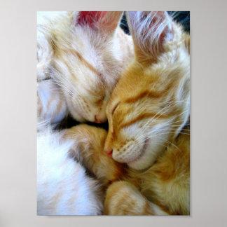Poster de los gatitos del Snuggle Póster