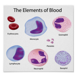 Poster de los glóbulos