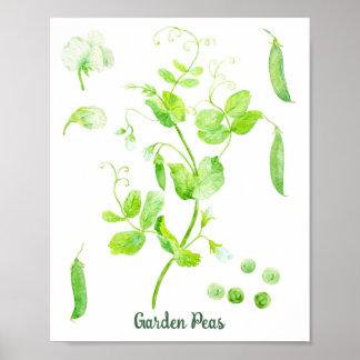 Poster de los guisantes de jardín de la acuarela póster