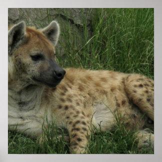 Poster de los Hyenas de risa