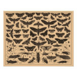 Poster de los insectos del vintage
