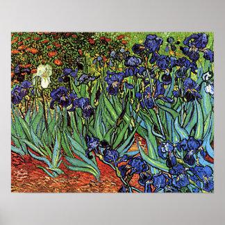 """Poster de los """"iris"""" de Vincent van Gogh"""