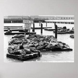 Poster de los leones marinos del embarcadero 39
