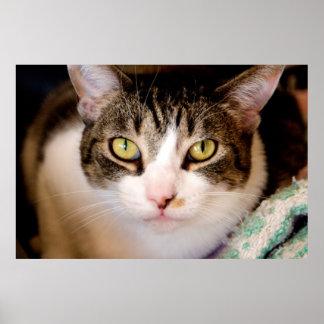 Poster de los ojos de gato