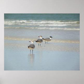 Poster de los pájaros de la playa de Vilano