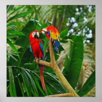 Poster de los pájaros del amor