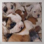 Poster de los perritos del dogo